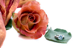 Rose and diamond ring Stock Photography