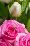 Rose and diamond ring inside Royalty Free Stock Photos