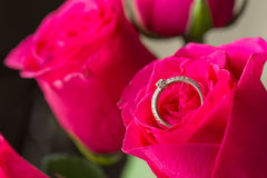 Rose and diamond ring inside Royalty Free Stock Image