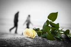 Rose, die auf defektem Baum auf dem Strand liegt Ein Paar, das in den Hintergrund geht Liebe Stockfotografie