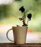 Rose dies Royalty Free Stock Photo