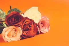 Rose differenti di colore, effetto della pellicola negativa Immagini Stock