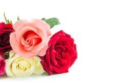 Rose differenti di colore su fondo bianco Fotografie Stock Libere da Diritti