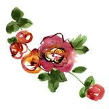Rose dipinte a mano dell'acquerello Elementi per il disegno Fotografie Stock Libere da Diritti