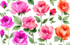 Rose dipinte a mano fresche dell'acquerello Fotografia Stock Libera da Diritti