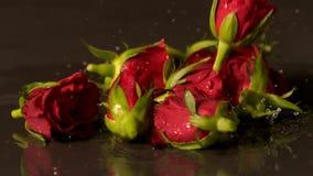 Rose dirige caer sobre superficie negra mojada almacen de video
