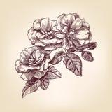 Rose disegnate a mano Immagini Stock