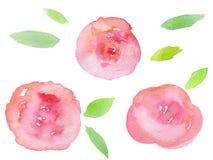 Rose disegnate a mano dell'acquerello Fotografie Stock