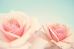 Rose douce de rose dans le style doux de couleur et de tache floue Photos libres de droits