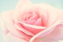 Rose douce de rose dans le style doux de couleur et de tache floue Image libre de droits