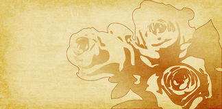 Rose drawing on beige paper background Royalty Free Stock Photography