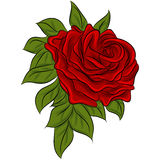 Rose Drawing Royalty Free Stock Images