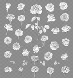 Rose drawing set isolated on transparent background. hand drawn royalty free stock photography