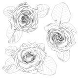 Rose drenada mano Imagenes de archivo