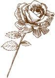Rose drenada mano libre illustration