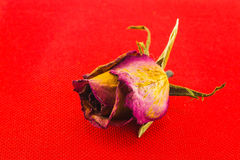 Rose. Dry to show love Royalty Free Stock Image