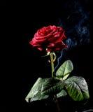 rose dymu obrazy royalty free