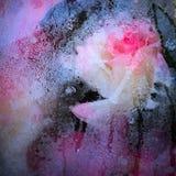 Rose e condensazione fotografia stock