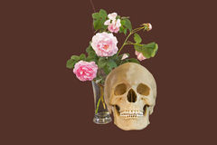 Rose e cranio Fotografie Stock