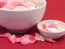 Rose e crema dentellare fotografia stock