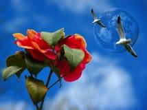 Rose e gabbiani contro un cielo blu. Fotografia Stock