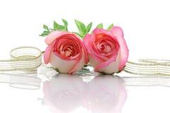 Rose e nastro Immagine Stock