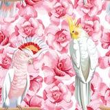 Rose e pappagallo senza cuciture della composizione Fotografia Stock Libera da Diritti