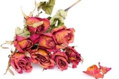 Rose e petali appassiti sopra fondo bianco Immagini Stock