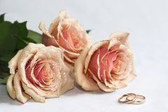 Rose ed anelli Immagine Stock