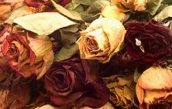 Rose ed anello Fotografia Stock