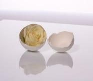 Rose in einem Shell lizenzfreies stockfoto