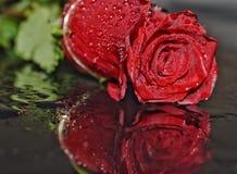 Rose en agua Fotos de archivo libres de regalías