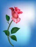 Rose en azul Fotografía de archivo