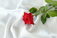 Rose en blanco Foto de archivo