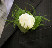 Rose en chaqueta del bolsillo Foto de archivo