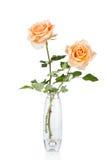 Rose en el florero aislado sobre blanco Imagen de archivo