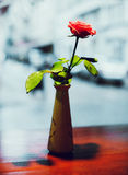 Rose en florero Foto de archivo libre de regalías