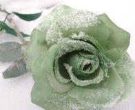 Rose en hiver. Photo libre de droits
