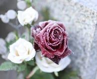 Rose en hiver Image libre de droits