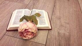Rose en la biblia abierta contra los tableros grises Imagenes de archivo
