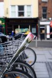 Rose en la bicicleta Foto de archivo
