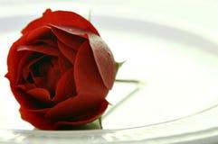 Rose en la placa Fotos de archivo libres de regalías