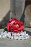 Rose en las perlas Foto de archivo libre de regalías