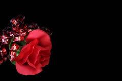 Rose en negro Foto de archivo libre de regalías