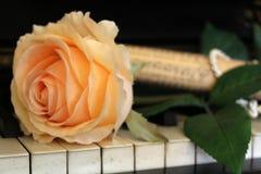 Rose en piano Fotos de archivo