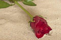 Rose en sable Photos stock