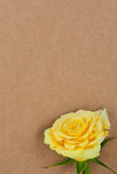 Rose en un documento de información. Imagen de archivo libre de regalías