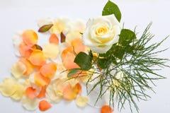 Rose en un florero Imagenes de archivo