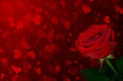 Rose en un fondo de corazones Fotografía de archivo libre de regalías