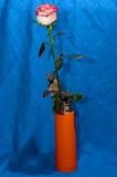 Rose en un tronco en un florero Imágenes de archivo libres de regalías